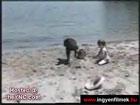 Kutyaparádé : P